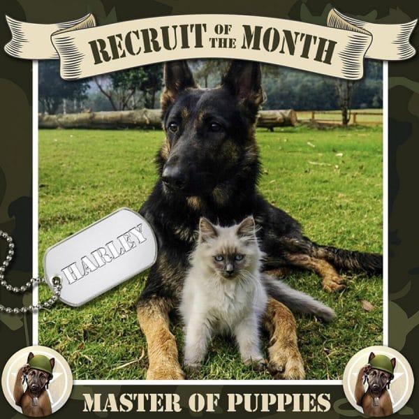 Dog Trainers Gold Coast